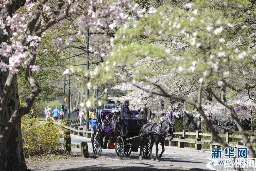 (国际·北京世园会)(12)世界园林巡礼——纽约的城市花园:中央公园
