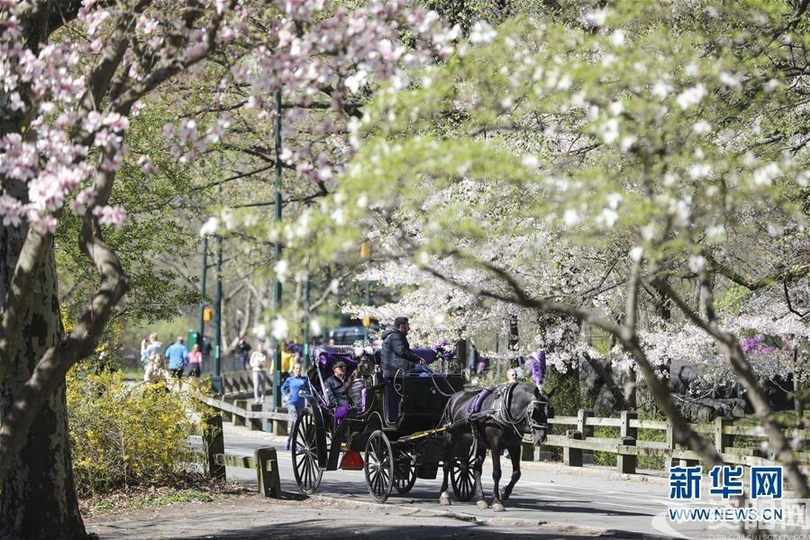 (国际·北京世园会)(9)世界园林巡礼——纽约的城市花园:中央公园