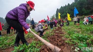 挖红薯 尝美味 亲子共寻农耕文化