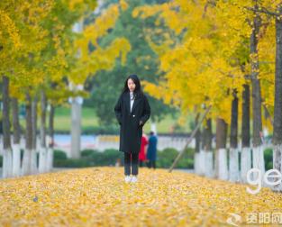 【网红打卡地】银杏飘黄成最美风景,你能读懂这最美的颜色吗?