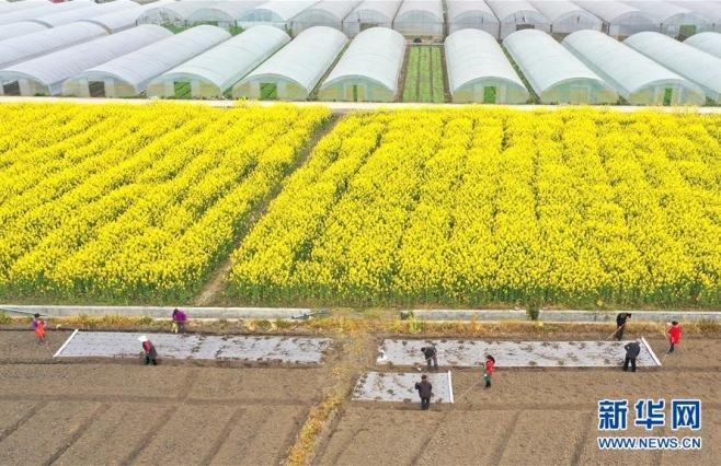 【圖集】農(nong)忙(mang)在春天里