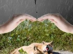 別再(zai)讓野生動物(wu)成為病毒源頭