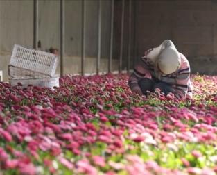 戈壁深處的鮮花(hua)致富經