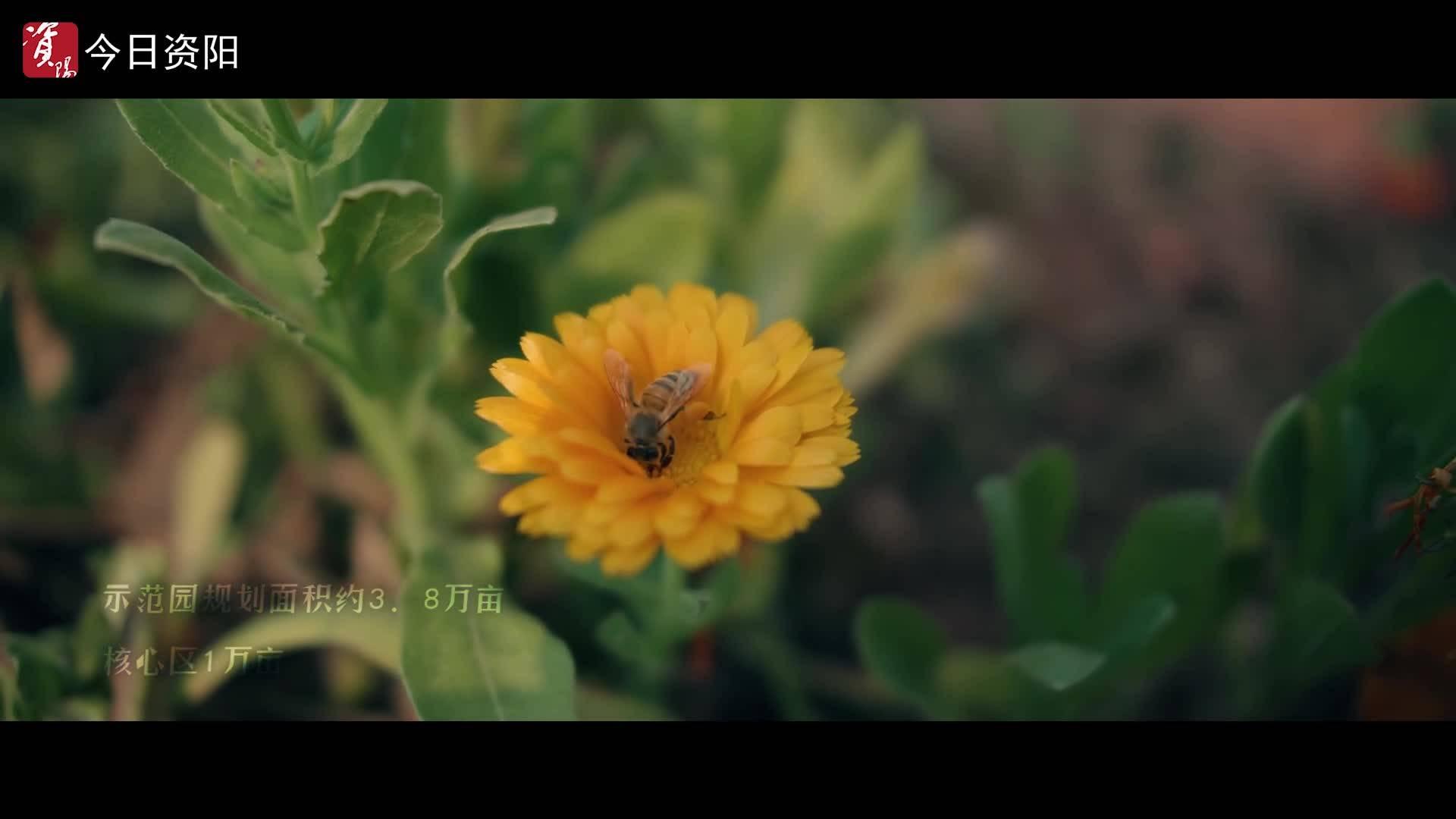 【视频】今看资阳·春||乐至产业园