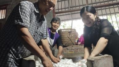 樂至實施(shi)蠶桑產業發展風險金春繭(jian)收購(gou)方案