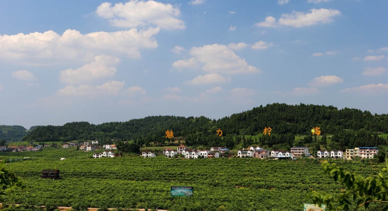 資陽農業發展明確10大重(zhong)點(dian)任務(wu)