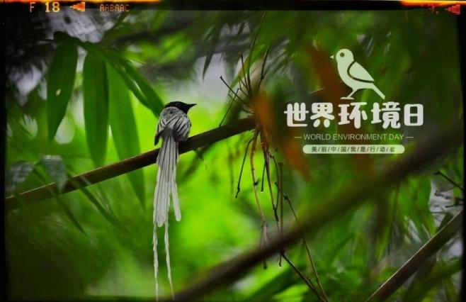 【圖集】世界(jie)環境日(ri)︰火井(jing)鎮成(cheng)為(wei)觀(guan)鳥勝地