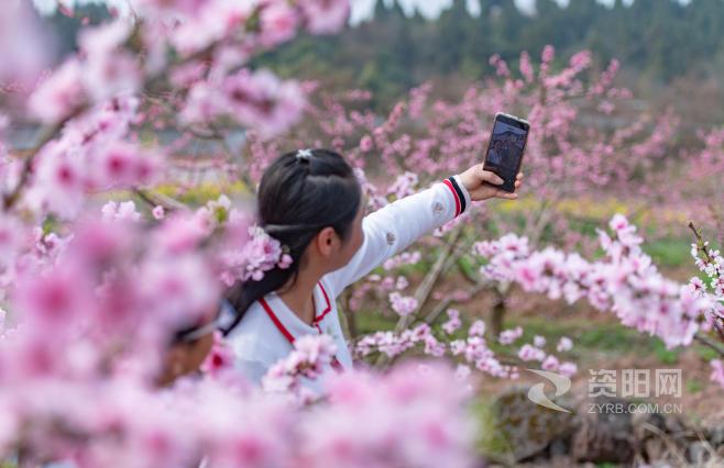 图集||桃花朵朵开 景美游人醉