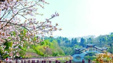 图集||满目春色·花开资阳