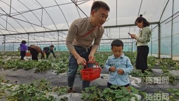 图集||采摘观光、做陶艺学扎染……晏家坝村成为游客近郊游又一打卡地