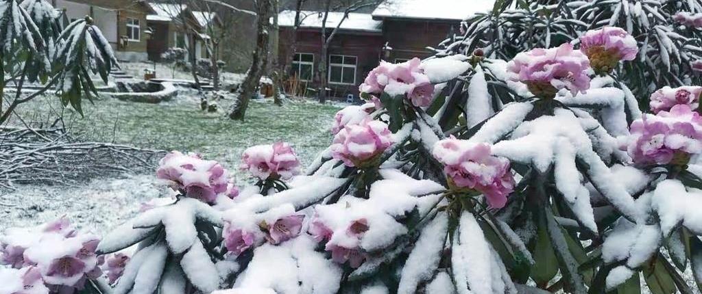 图集|春分至,广元多地迎来降雪