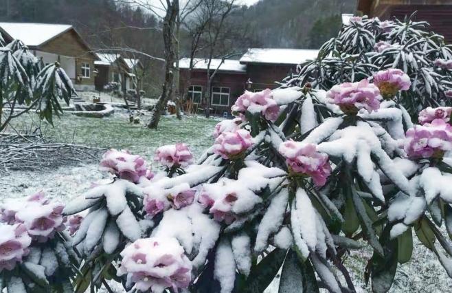 图集 春分至,广元多地迎来降雪