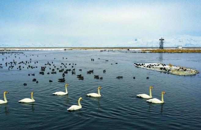 【图集】花湖有约 今年首批黑颈鹤提早归来