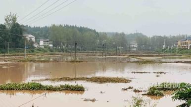 遭遇强降雨 雁江区丹山镇干群齐心抢险排涝